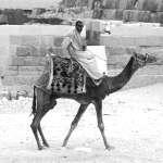 Bild von 1 von 3 Kamelen
