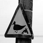 Bild von 1 von 3 Warnungen