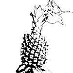 Bild von 1 von 3 Ananas