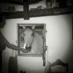 Bild von 1 von 3 Reiterreisen