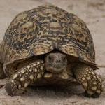 Bild von 1 von 3 Schildkröten