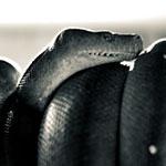 Bild von 1 von 3 Schlangen