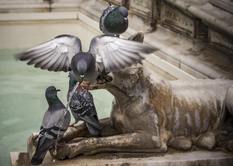 Bild von 1 von 3 Tauben